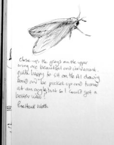 sketch book moth