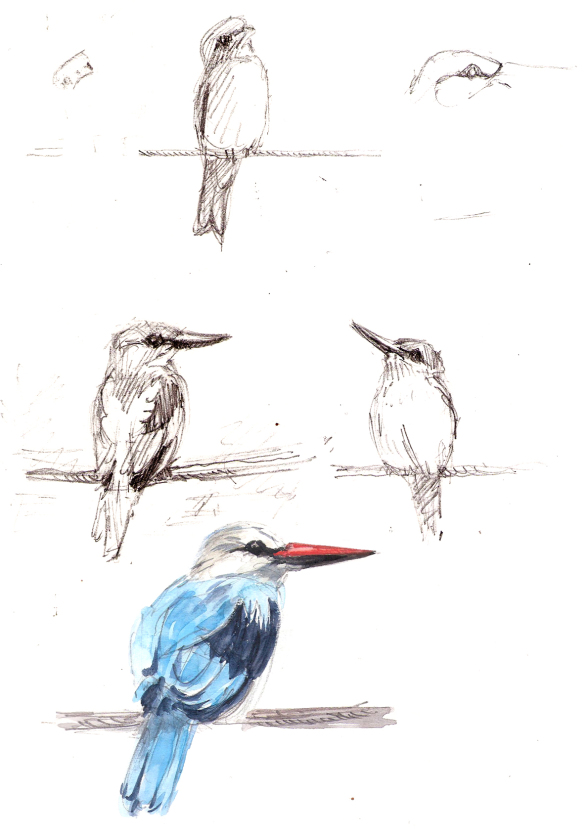 kingfisher-and-roller