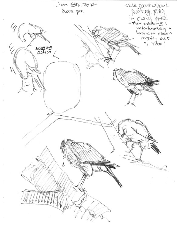 pluckingprey