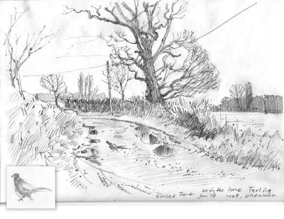 terling-jan-17-2014-sketchbook-pencil