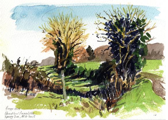 winter-hedges-in-sun