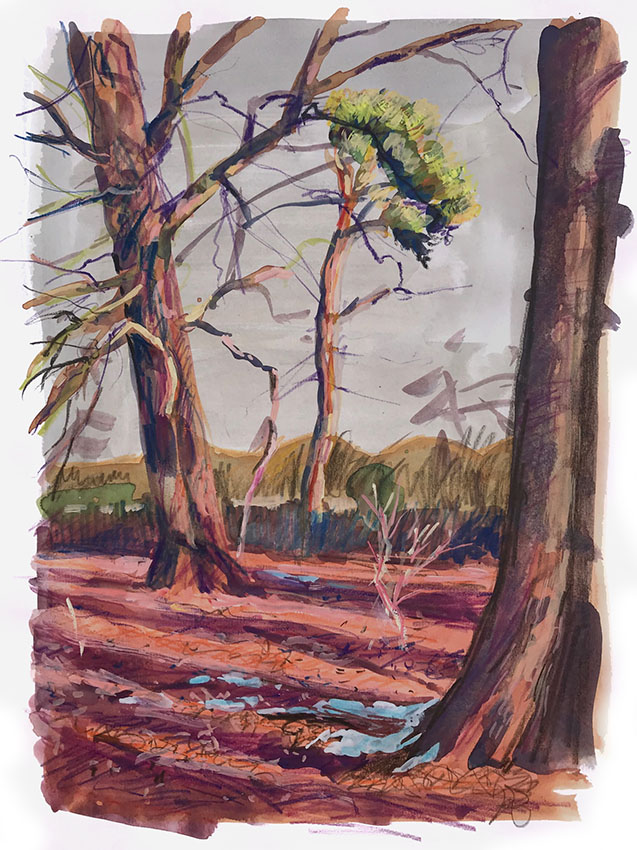 Colour in the beechwood 1, Mixed media sketchbook drawing