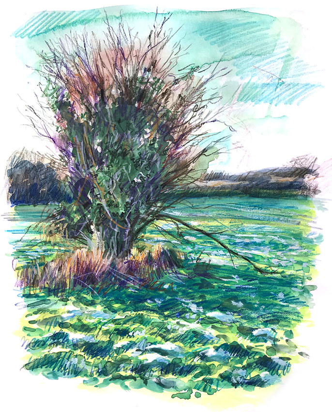 Hawthorn cold meadow, mixed media sketch book drawing